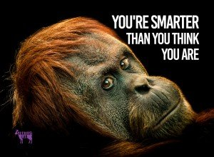 Chimp-Remember youre smarter than you think you are