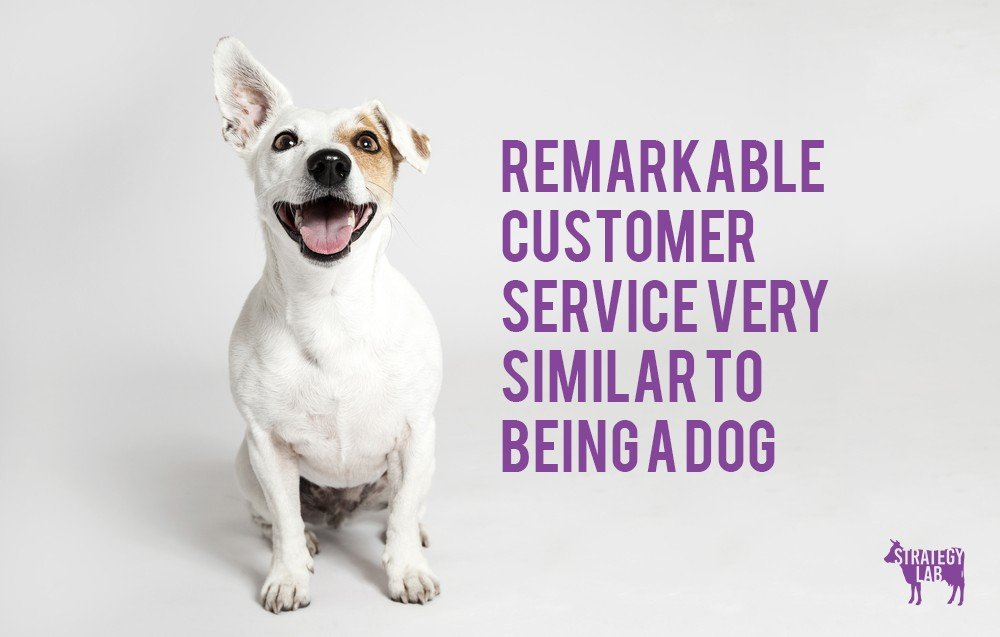 remarkable customer service is similar to being a dog