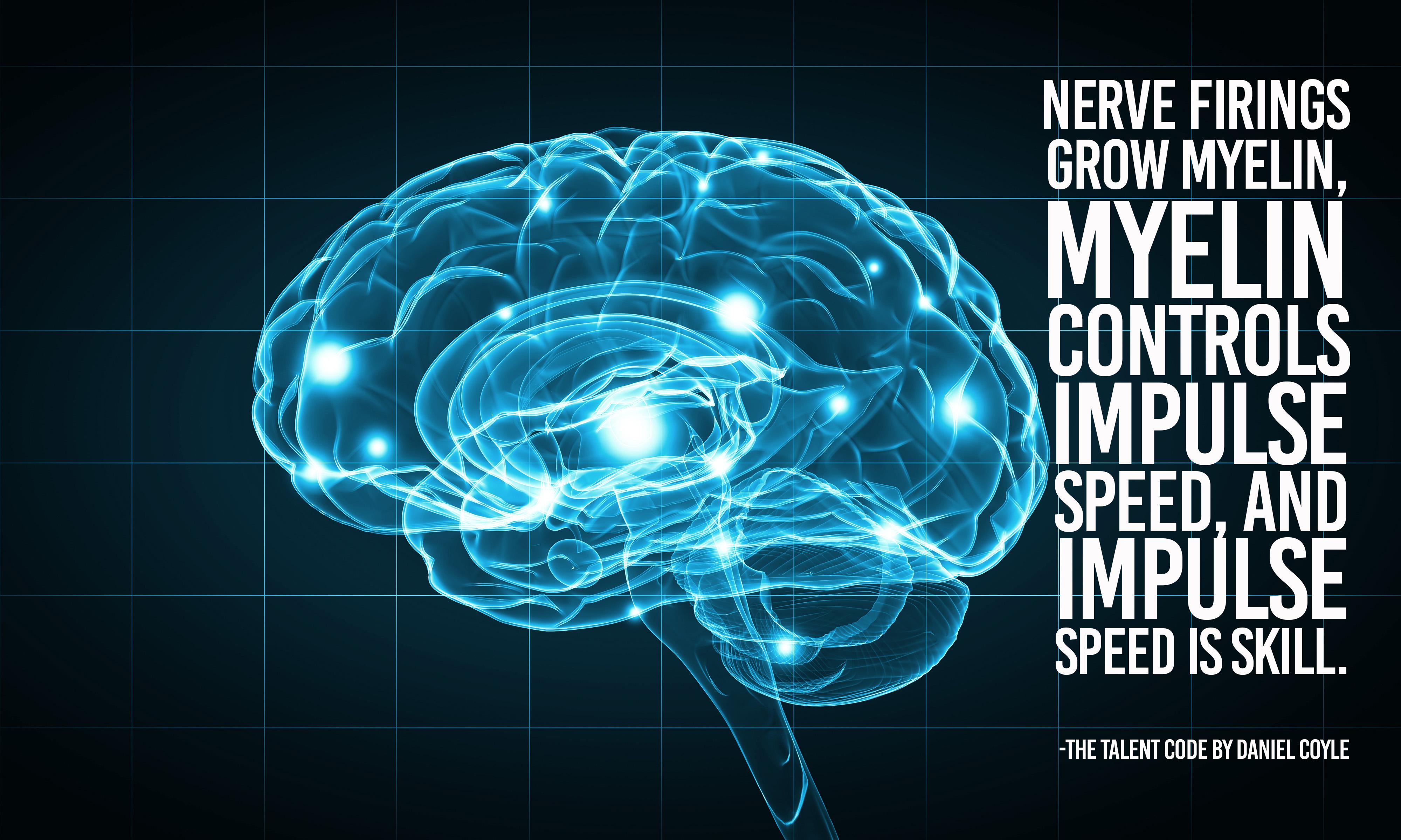 nerve firings grow myelin myelin controls impulse speed and impulse speed is skill