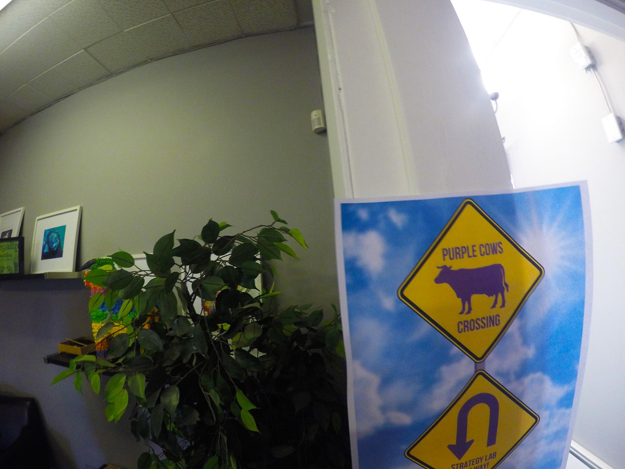 Purple Cow Crossing
